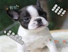家养纯种法国斗牛犬便宜出售了 喜欢的可以加我详聊