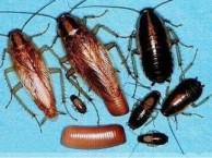 灭蟑螂公司专业灭鼠杀虫服务