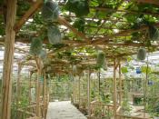 哪里的蔬菜温室大棚口碑好 现代化温室大棚