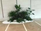 南昌办公室植物是租好还是买好