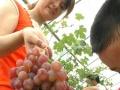 杭州秀山美地农庄周末烧烤