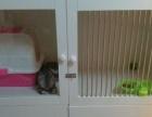 猫笼子 狗笼子宠物箱