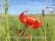 呼伦贝尔草原边境卡线四日旅游详解
