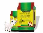 小尾寒羊快速育肥六措施及饲料选择