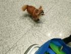 长沙广州深圳重庆宠物托运随主人一起坐飞机宠物单独坐飞机