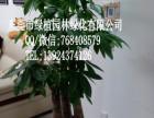 供应花卉租摆发财树垂直绿化室内外绿化养护东莞租花