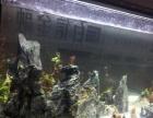 九河冻红虫丰年虾饲料鱼