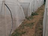 厂家批发定做蚂蚱网 蝗虫养殖网 养殖网棚