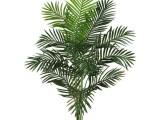 黃南招財貓綠植租售公司 專業從事各種場合的綠植租擺和銷售