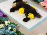 宠物殡葬 大型犬死了处理