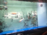 转1.5米底滤鱼缸一个