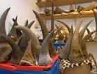 哪里有犀牛角买家,个人收购犀牛角,现金交易犀牛角