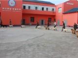 鄭州訓犬基地訓犬基地有哪些 訓犬就找訓犬幫