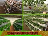 优质草莓种植大槽 无土栽培槽 草莓种植槽 私人定制 价格优惠