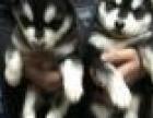 呼和浩特新城区济和动物诊所