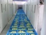 我场常年出售大品种鹅苗,狮头鹅,扬州大白鹅,皖西鹅欢迎来洽谈