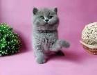 自家宠物猫求好心人领养免费