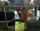 养殖咨询 牛吃什么10天催肥 养殖必看