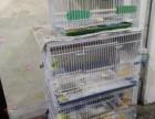 家养各种精品玉鸟