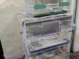 家养各种玉鸟