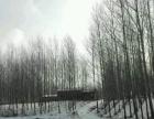 二龙山林场 23亩猪舍400米砖房60米10万