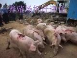 大同建材厂损失评估,养鹅场拆迁评估,肉牛场赔偿评估