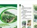 温州花语园艺 绿植租摆 养护 室内绿化