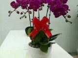 北京花卉公司