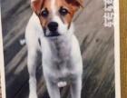 世界名犬图集161张
