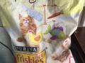 皇家猫粮喜跃猫粮