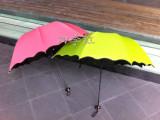 新品简洁大方遇水现花黑胶荷叶边阿波罗防晒伞太阳伞超强防紫外线