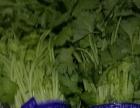 专业蔬菜批发配送、精品特菜批发、质量保证、价格优惠