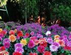 盛世花都(昆明)鲜花批发:是专门从事鲜切花、保鲜花