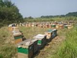湖南特产,湘西特产商城,新晃牛肉,蜂窝窝蜂蜜原蜜