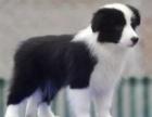 温州哪里有狗狗卖温州狗狗多少钱温州哪里有狗狗领养