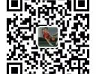 宁波东论篮球培训班电话