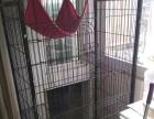 猫笼低价处理转让