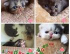 加菲猫猫找新家喜欢滴滴