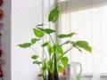 南昌同城绿植租摆销售、免费配送、园林设计施工