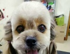 宠物美容,宠物护理