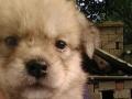 小型狗狗出售