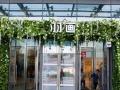 杭州真植物墙-仿真植物墙-雨林造景-低价便宜实惠