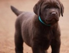 本地犬舍一出售各种世界名犬一包养活一签协议一送用品