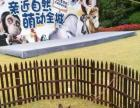 嘉兴有澳洲吉祥物迷你袋鼠出租 上海启欣展览展示有限