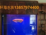 鱼缸清洗,鱼缸保养,鱼缸定做