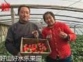 青岛水果微商代理合作-草莓拿货货源-烟台苹果产地直供