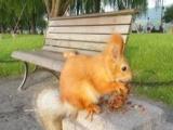 魔王幼鼠、金花松鼠现货西安可自选可送外地大巴可淘宝