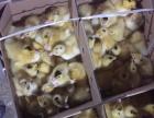鸡苗2.5元 包技术 包销路 优质苗批发