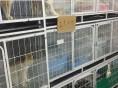 珠海哪里有卖苏格兰折耳猫价格多少 折耳猫好养吗