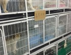 中山哪里有卖英国短毛猫价格多少 英国短毛猫大概多少钱